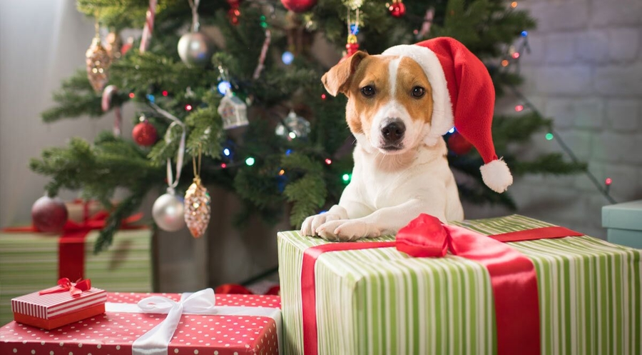 10 Great Holiday Gifts for Your Dog