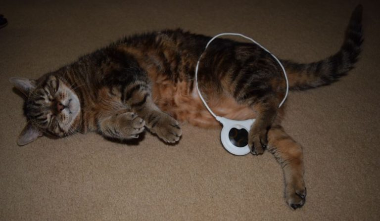Cat with loop
