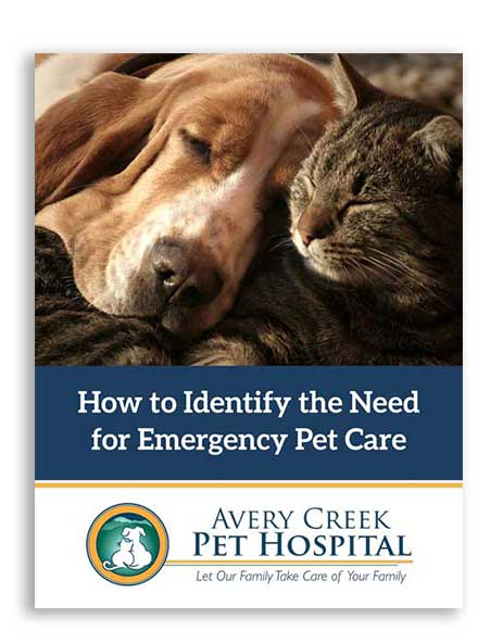 Emergecy Pet Care