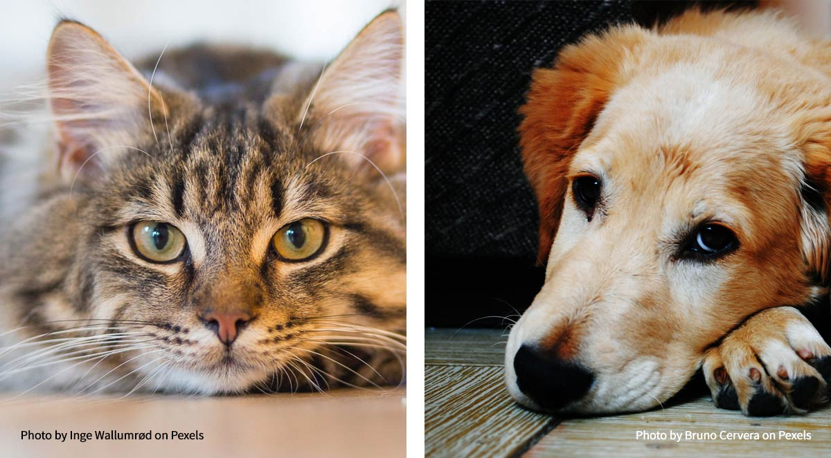 what to do if your dog or cat in pain