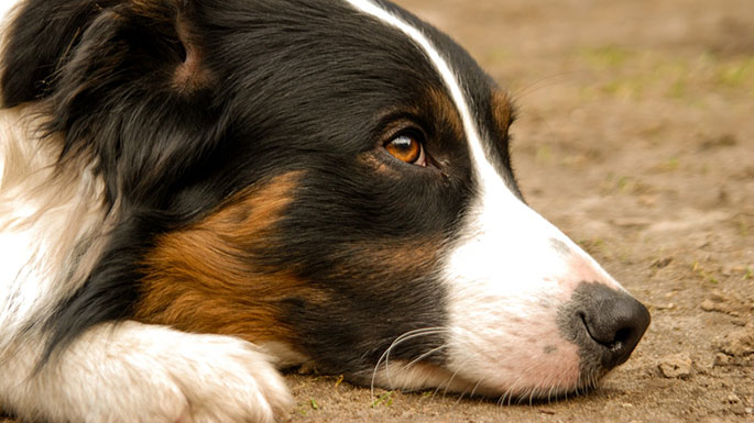 how to prevent heartworm in dogs asheville nc