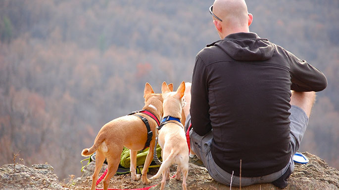 hiking with dogs asheville nc