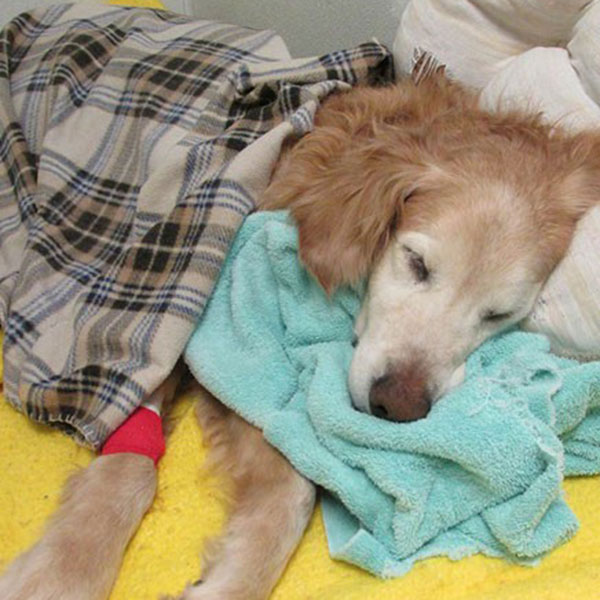 emergency surgery for pets