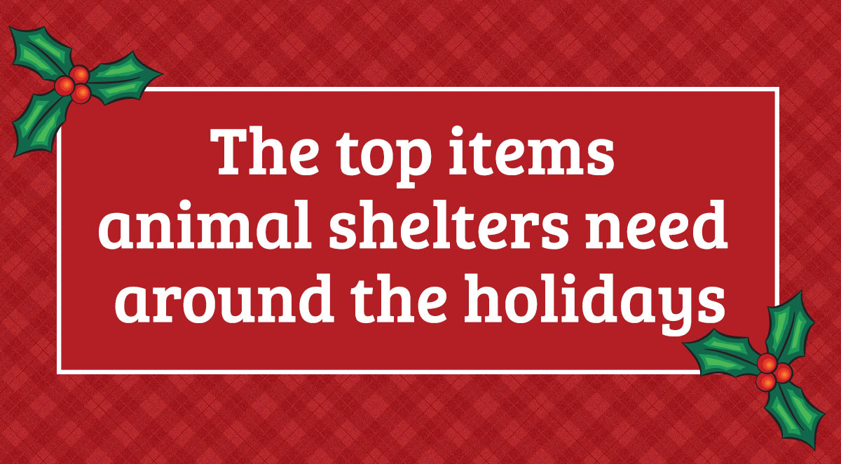 top items animal shelter