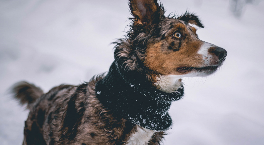 How to Keep Pets Safe During Winter in Asheville